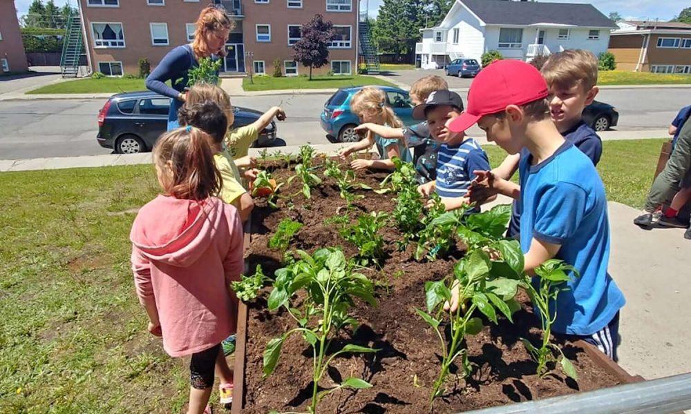 Le jardinage en bacs : De la semence à la récolte! À l'école Sacré-Cœur, nos élèves découvrent les étapes de la production de légumes et de fines herbes qui se retrouvent dans leurs assiettes.