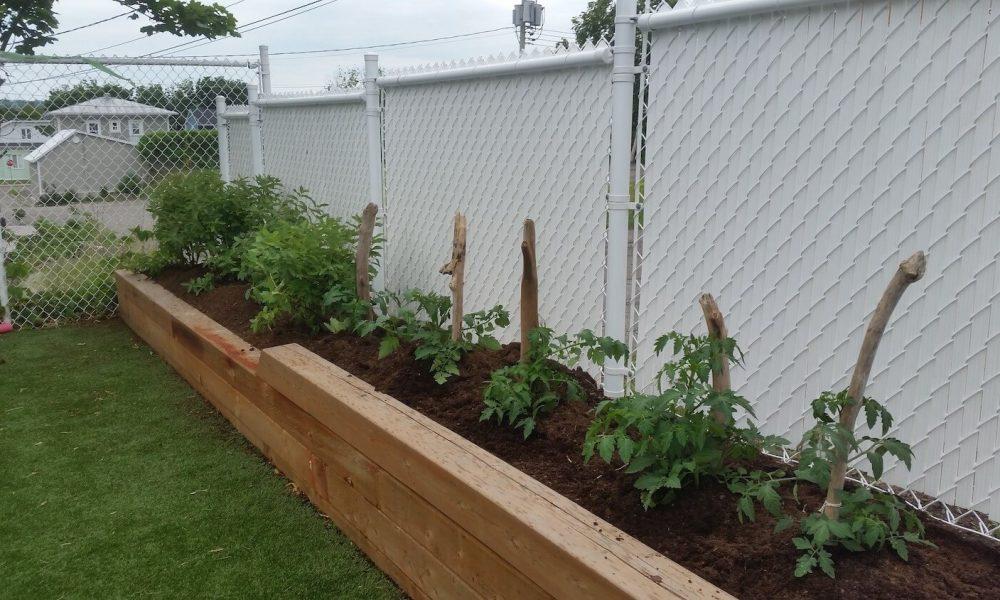 Les p'tits jardiniers de la Farandole : Les enfants de la Farandole avec l'équipe des éducatrices cultivent un jardin dont les aliments sont cuisinés et mangés sur place.