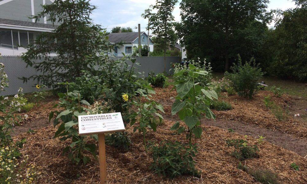 Îlots fruitiers : Cet espace de permaculture où poussent de nombreuses variétés de fruits, de fines herbes et de plantes médicinales est offert aux citoyens.