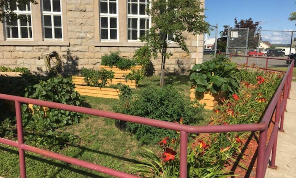 Potager urbain : Activité permettant aux jeunes de 1e à 5e secondaire à se familiariser avec les bases de la botanique et de produire fleurs, fruits et légumes.